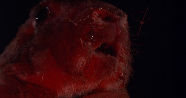 image3nightlepus